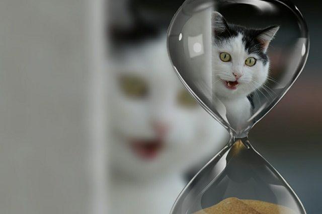 ile zyja koty