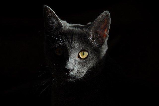 jak widzi kot