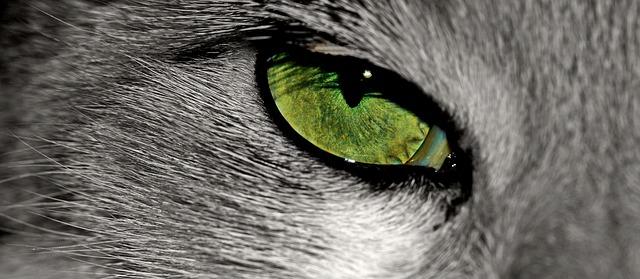 trzecia powieka u kota