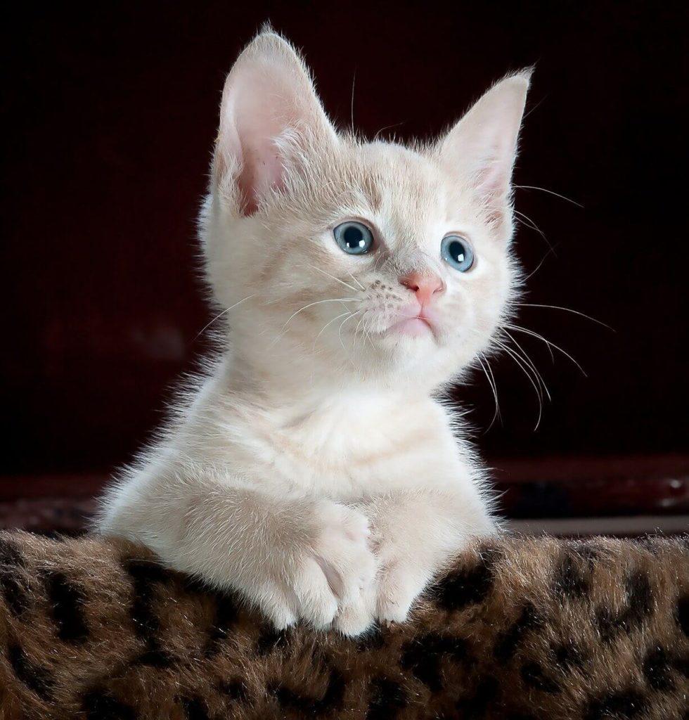 Mały kociak