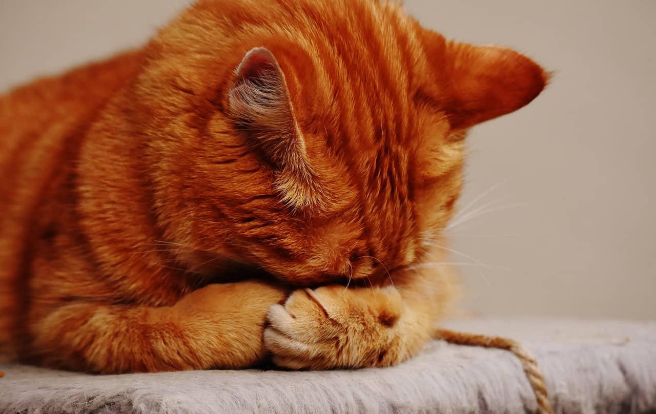 choroba kociego pazura