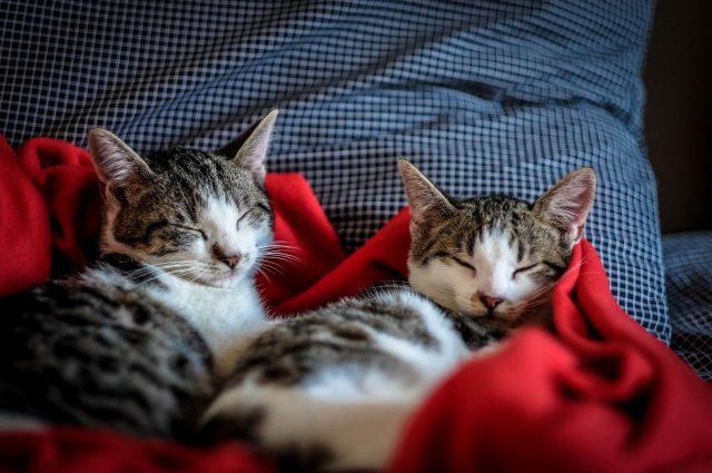 Jak odróżnić kota od kotki