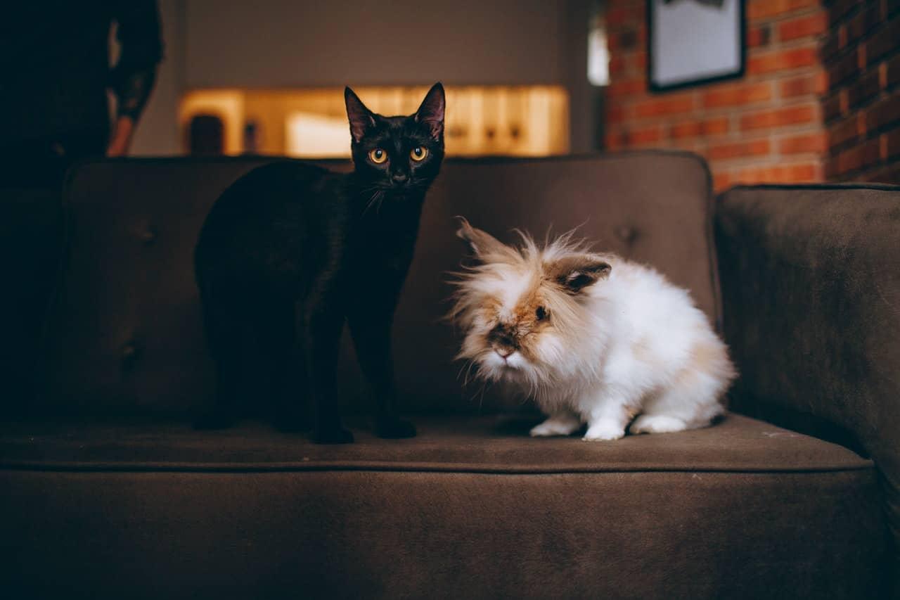 co odstrasza koty