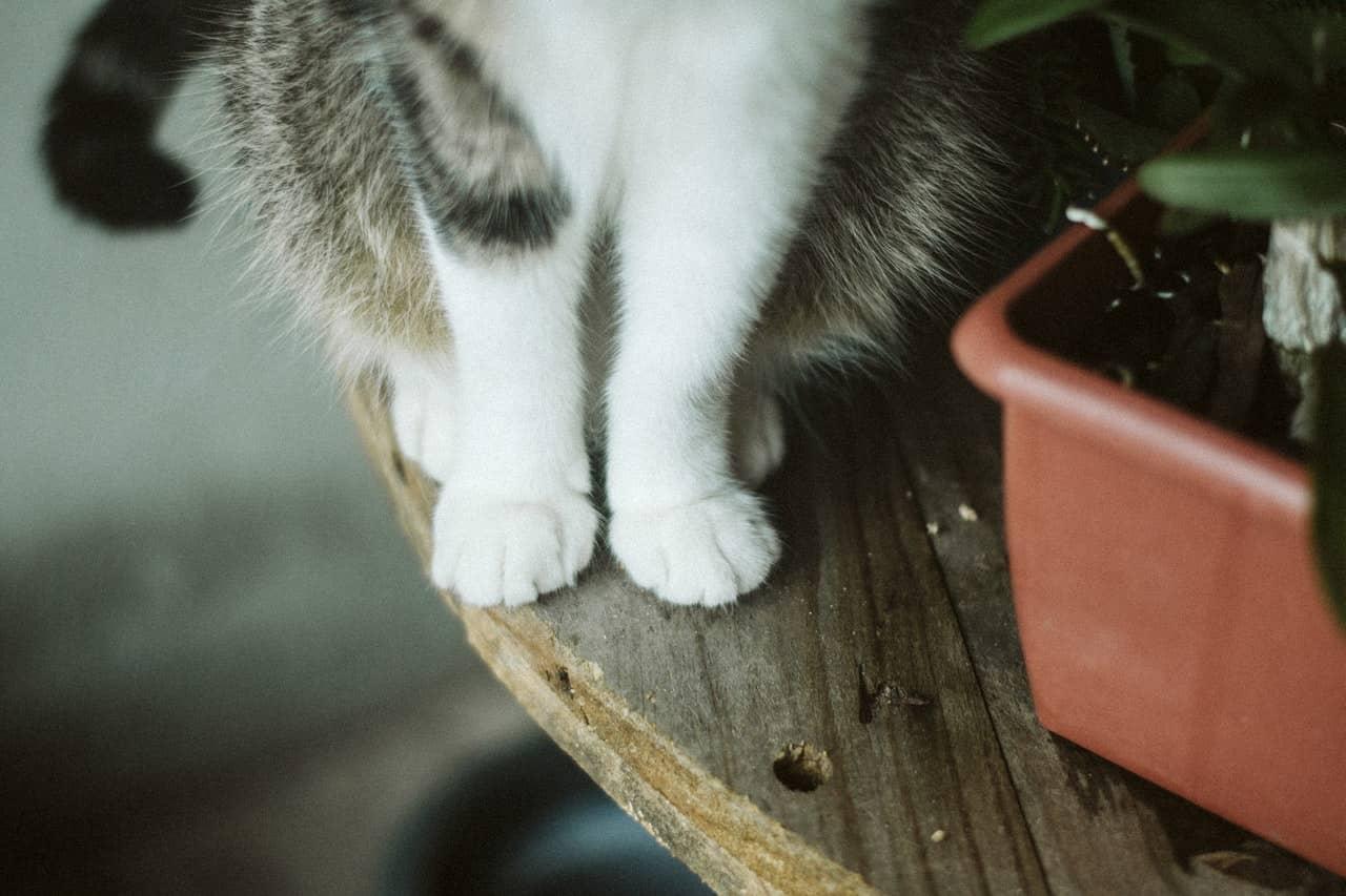 Dlaczego kot macha ogonem