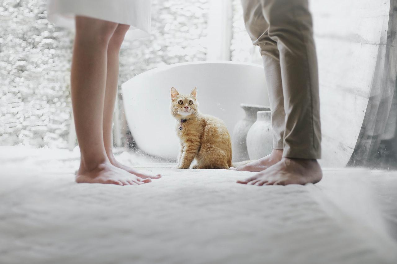 Jak pozbyć się zapachu kociego moczu
