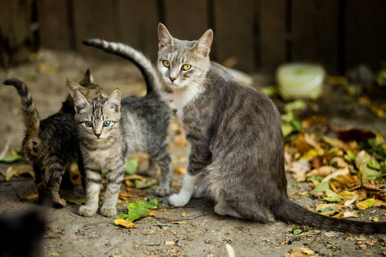 koty dla dzieci