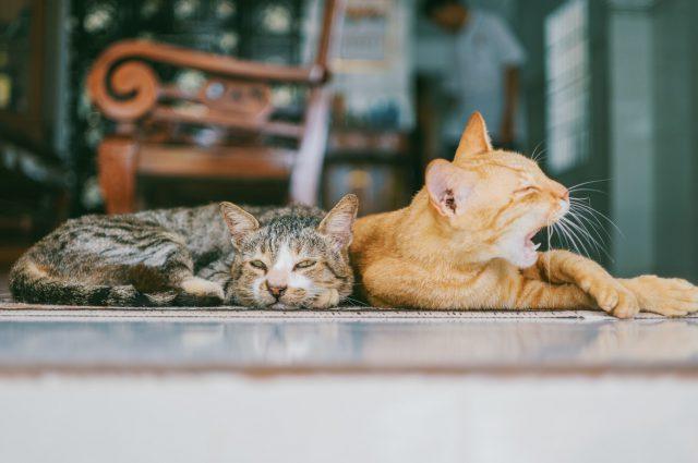 Łupież u kota