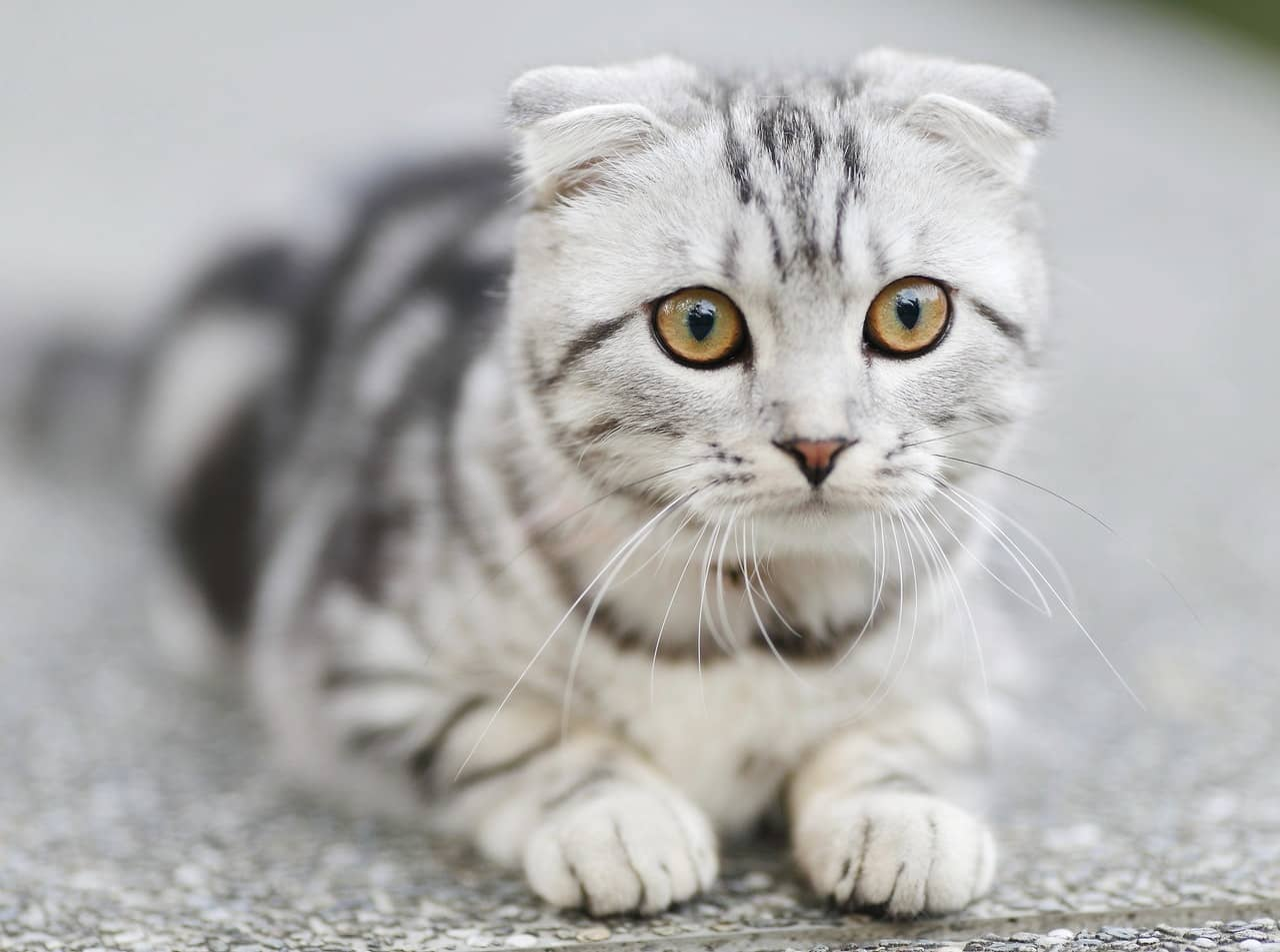 płaczący kot