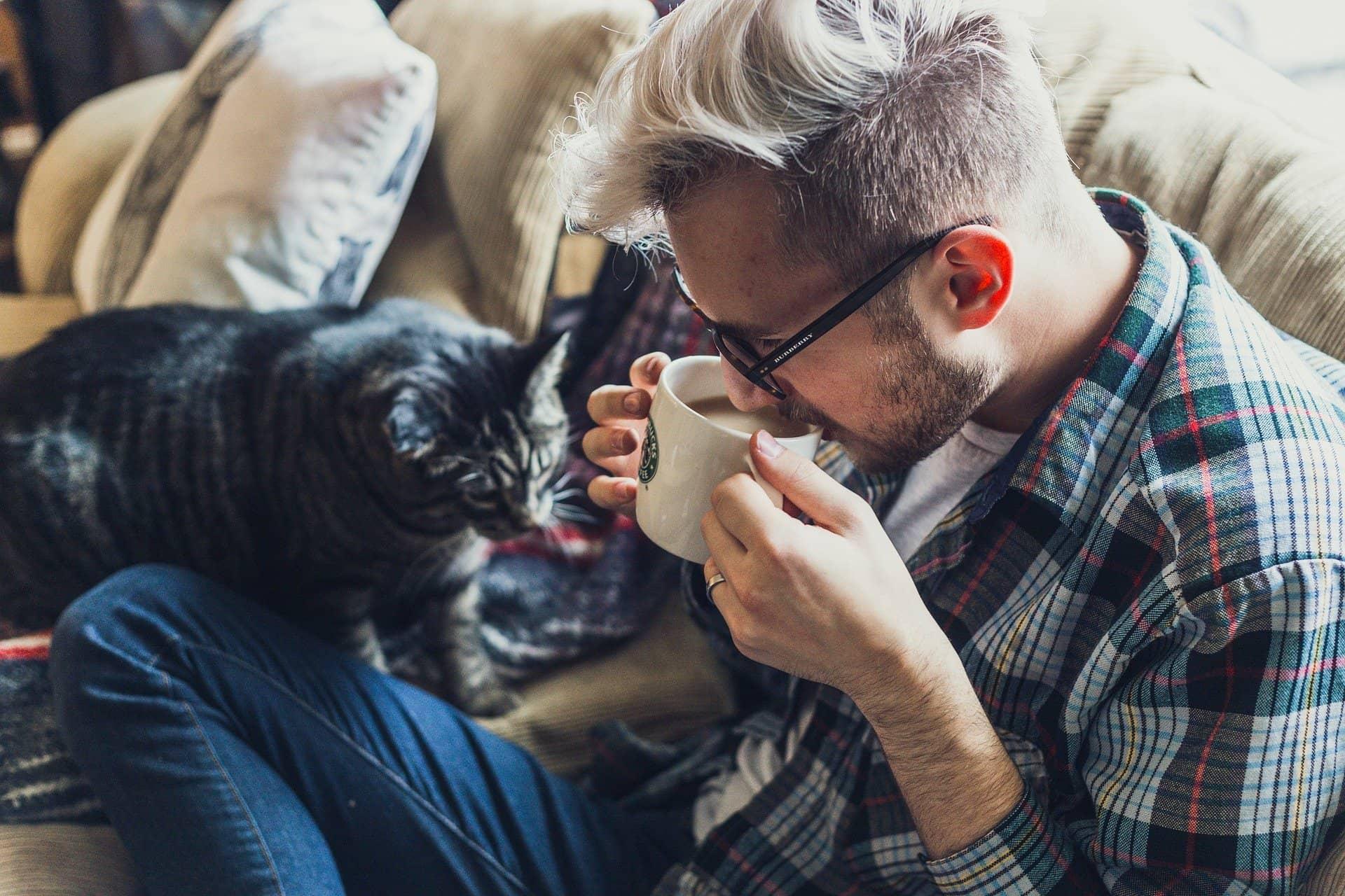 jak czyścić koci mocz