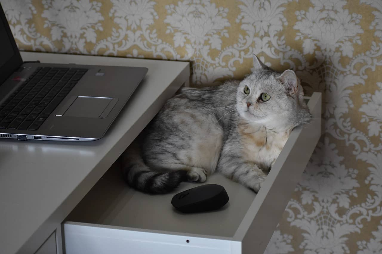 kącik dla kota