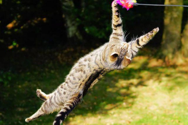 laser dla kota