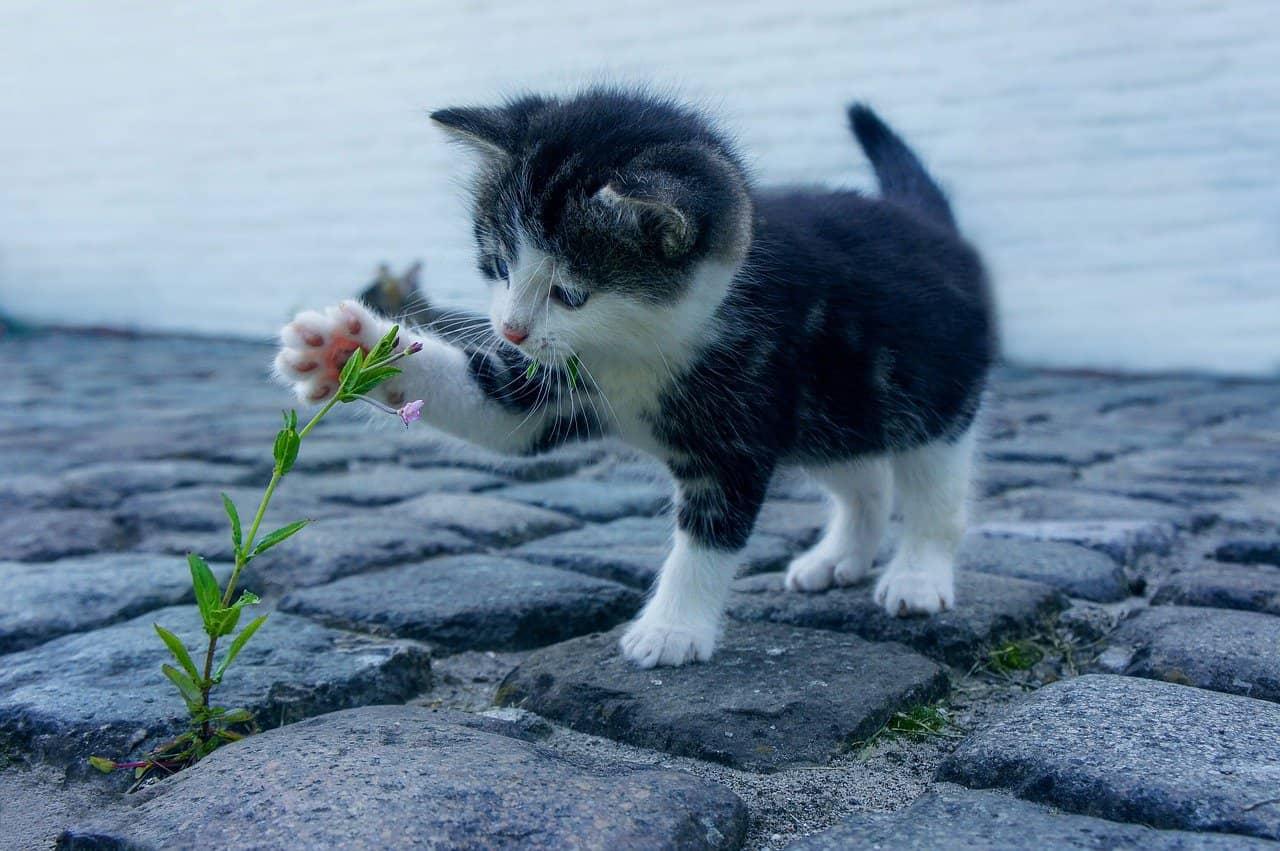 Jak nauczyć kota aportować
