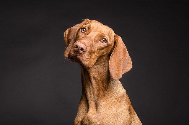 pielęgnacja oczy i uszu psa