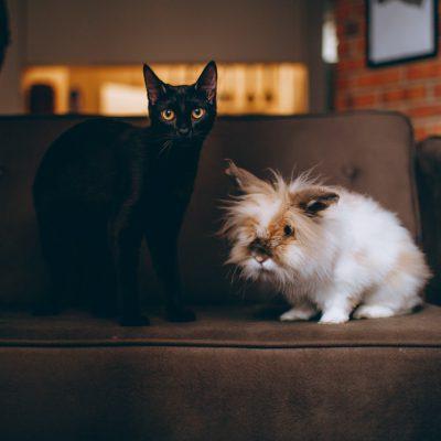 Co odstrasza koty?