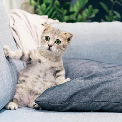 Dlaczego koty boją się ogórków ?