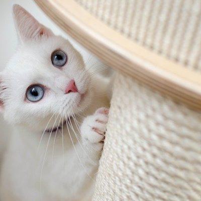Drapak dla kota – jaki wybrać?
