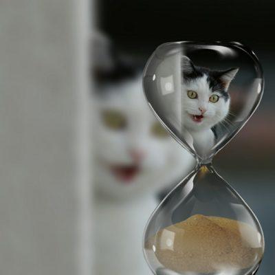 Ile żyją koty ?