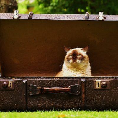 Jak nauczyć kota korzystać z kuwety ?
