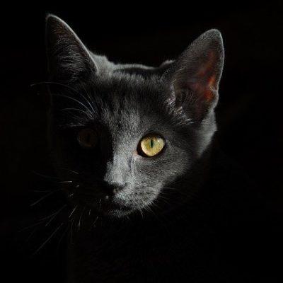 Jak widzi kot ?