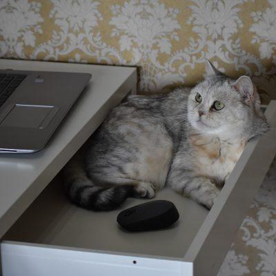 5 niezbędnych elementów do stworzenia stylowego i komfortowego kącika dla Twojego kota