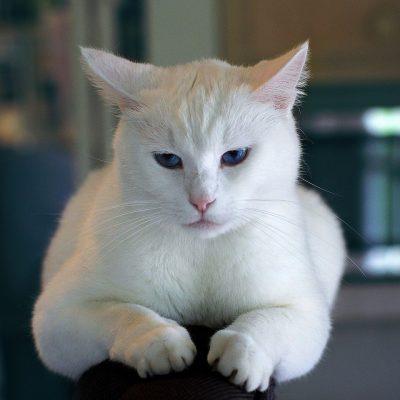 Mój kot drapie się po meblach, co mogę zrobić?