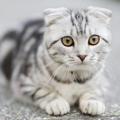 Płaczący kot – co to oznacza?