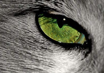 Trzecia powieka u kota – czy to powód do niepokoju?