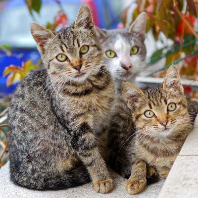 Wystawa kotów – raj dla kociarzy